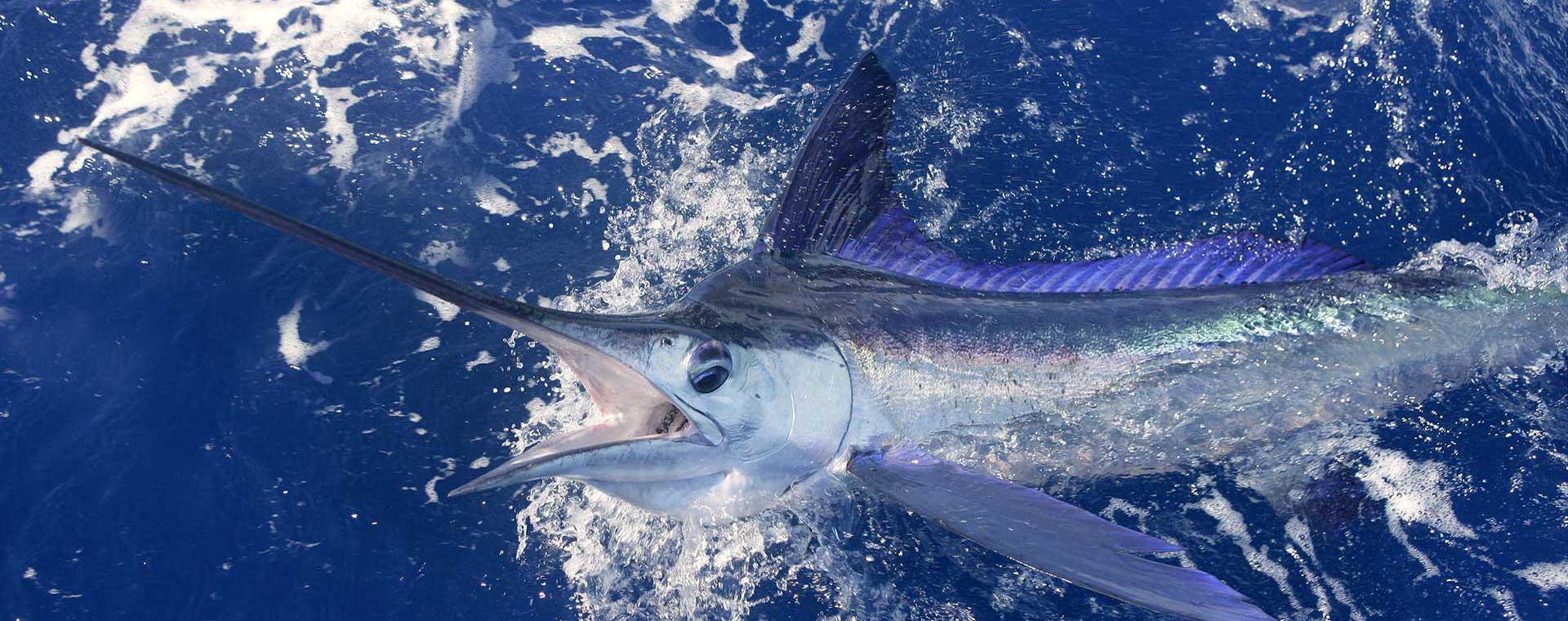 4th annual blue marlin cove bahamas wahoo classic