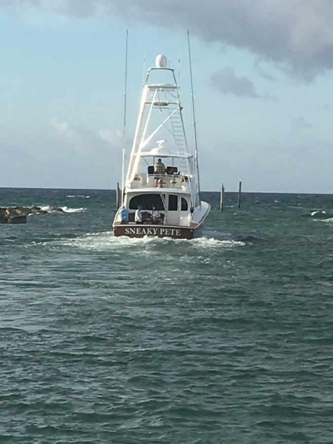 blue marlin cove sneaky pete fishing expedition